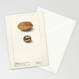 Pecans (Carya Illinoinensis)(1904) by Deborah Griscom Passmore Stationery Cards