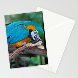 Chester IV Stationery Cards