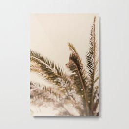 Pale Palm - Tropical Photograph Metal Print