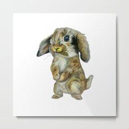 Baby Hare  Metal Print