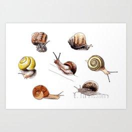 Snail party Kunstdrucke