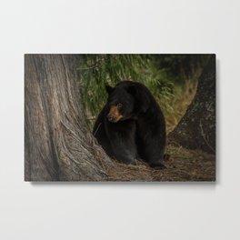 Black Bear in the Woods Metal Print