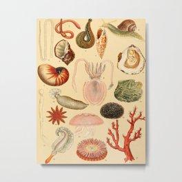 Popular History of Animals Shell Ocean Animals Vintage Scientific Illustration Educational Diagrams Metal Print