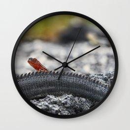 Mini lava lizard on Iguana's tail in Galapagos Wall Clock