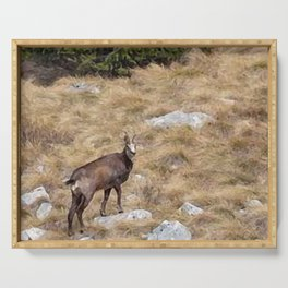 painting of chamois  Serving Tray