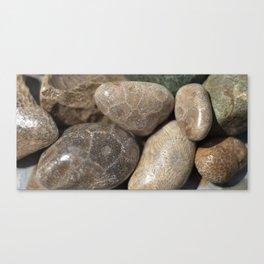 Petoskey Stones Canvas Print
