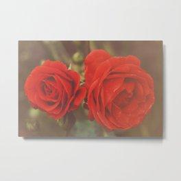 Story of Roses  Metal Print