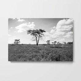 Fine Art Kalmthoutse Heide Belgium Antwerp Tree in heather Metal Print
