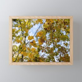Yellow leaves Framed Mini Art Print