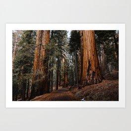 Walking Sequoia 2 Kunstdrucke
