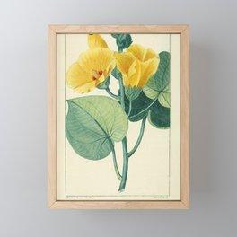 Flower ketmie a feuilles de tilleul (Fr)13 Framed Mini Art Print