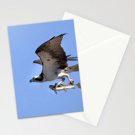 Watercolor Bird, Osprey 08, Yellowstone, Wyoming Stationery Cards