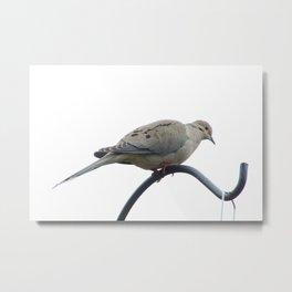 Birds 2 Metal Print