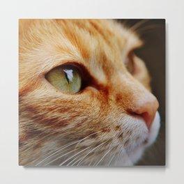 cat face 4 Metal Print