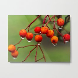 Rowan Berries with Water Droplets Metal Print