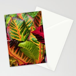 Caribbean Croton Stationery Cards