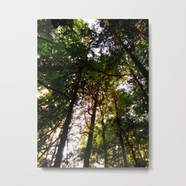 Canopy 2 Metal Print
