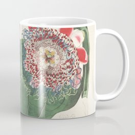 Flower 014 passiflora quadrangularis Squre stemmed Passion flower or Granadilla Vine20 Coffee Mug