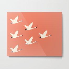 Tundra Swan (Amber) Metal Print