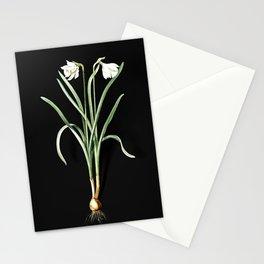 Vintage Narcissus Candidissimus Botanical Illustration on Black (Portrait) Stationery Cards