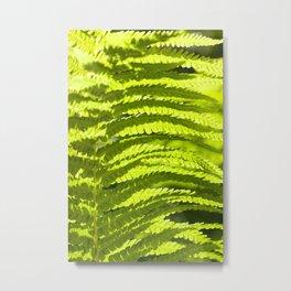 light fern leaves Metal Print