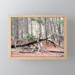 Fallen tree in the woods Framed Mini Art Print
