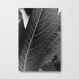 flower close up - black/white - eighteen Metal Print