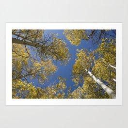 Aspens in the Sky! Art Print