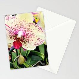Vanilla Pink Lemonade Sweet Summer Tropical Island Orchids Stationery Cards
