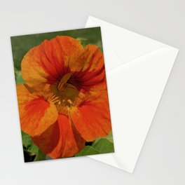 Glorious Nasturtium Stationery Cards