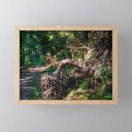 Fallen tree with big tree roots. Framed Mini Art Print
