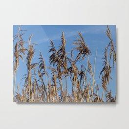 Reeds in Sunlight Metal Print