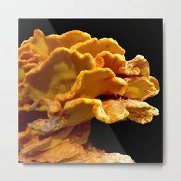 Beautiful Orange, Yellow, Wild Mushrooms Metal Print