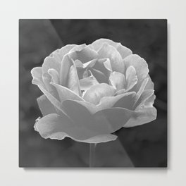 Silver Satin Rose - My Love For You Metal Print