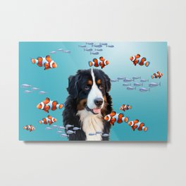 Bernese Mountain Dog - Clownfishes  Metal Print