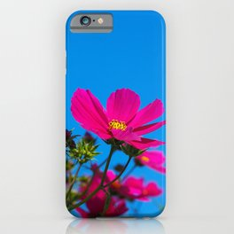 Pink Cosmos, Blue Sky iPhone Case