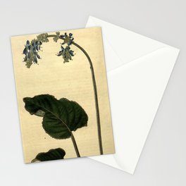 Flower 2436 salvia nutans Nodding Sage10 Stationery Cards