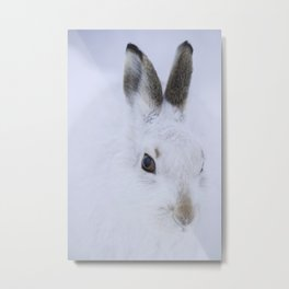 White bunny, white snow Metal Print