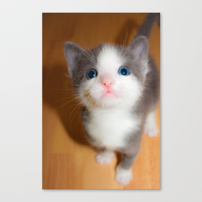 Grey And White Blue Eyed Kitten Canvas Print By Tsuttles Society6