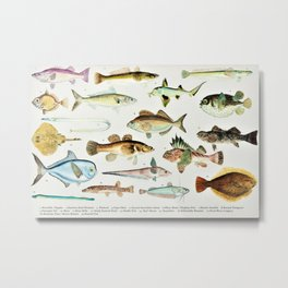 Illustrated Colorful Southern Pacific Ocean Exotic Game Fish Identification Chart No. 4 Metal Print