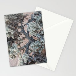 Silver Cholla Stationery Cards