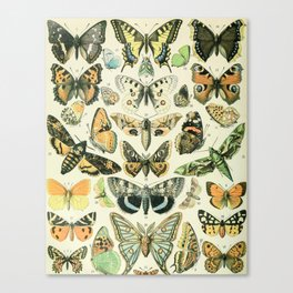 Vintage Butterfly Diagram // Papillions by Adolphe Millot XL 19th Century Science Textbook Artwork Canvas Print