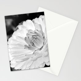 White blossoming chrysanth, black and white flower photography Stationery Cards