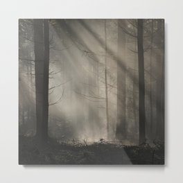 Stripes And Lines - Mystical Forest Nature Fine Art Photo Metal Print