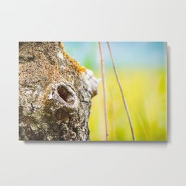 Beautiful hole from branch hollow focus on tree trunk bark Metal Print