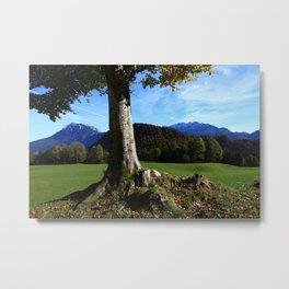 Alpine tree Metal Print