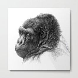 Gorilla G038b schukina Metal Print