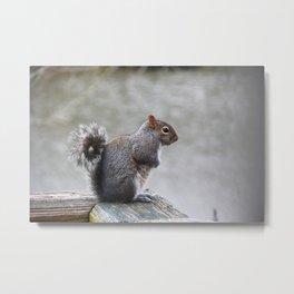 Observant Squirrel  Metal Print