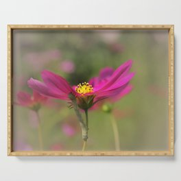 Cosmos Commuter - Flower Photography Serving Tray