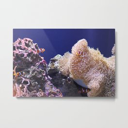 Finding Nemo in Seattle Metal Print